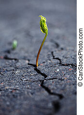 Growing plant - Green plant growing through dry cracked soil...