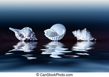 Sea shells - Three seashells reflecting in water over dark...