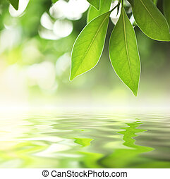 Leaves over water - Green leaves reflecting in water,...