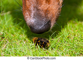 Curious Dog Sniffing Furry Worm Closeup - Closeup on Curious...