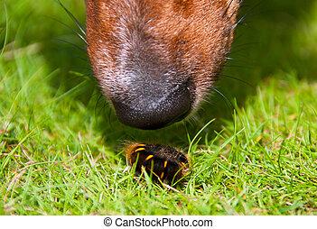 Curious Dog Sniffing Furry Worm Closeup - Closeup on Curious...