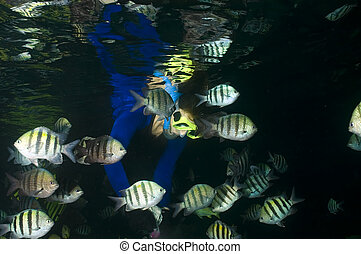Thunderball cave - A snorkeler is reflected on the dark...
