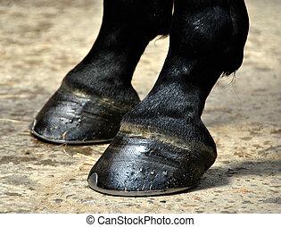 caballo, pezuña, -, Pezuñas