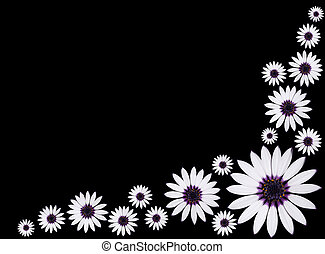 Group of Beautiful Osteospermum Asti White Daisy Flowers...