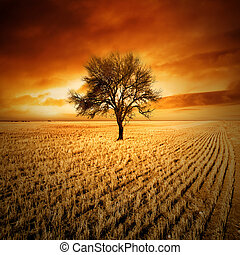 Sunset Tree - Amazing sunset over a tree in a field
