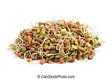 lentil seeds - Healthy food.Lentil seeds with sprouts...