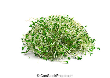 alfalfa sprouts - heap of alfalfa sprouts isolated on white
