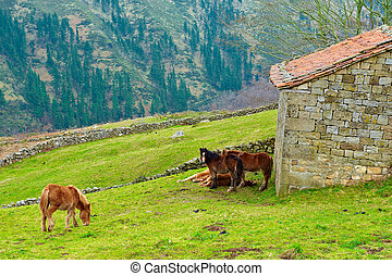 Alpine Meadows - Horses Grazing on Alpine Meadows on the...