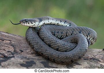 herbe, serpent