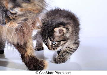 mother cat and kitten walking