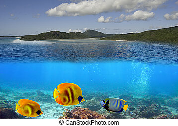 Whitehaven Beach Underwater in the Whitsundays Archipelago,...