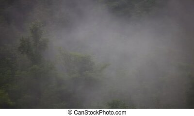 Heavy fog rising above forest