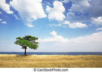 Field, tree, sea and blue sky