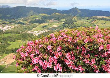 montagne, fiori, vista