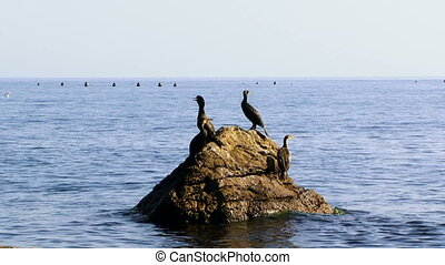 Ducks are sitting on a rock - A flock of ducks sitting on a...