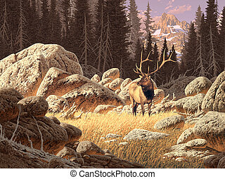 Yellowstone Elk - An elk bull set in a Rocky Mountain...