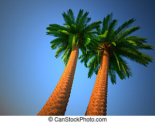 Palm tree - low angle This is a3d render illustration