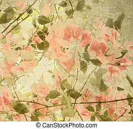 Peach and olive bouganvillea - Peach and olive Bouganvillea...