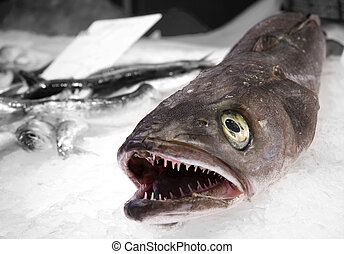 Fish with sharp teeth - Dead fish with sharp teeth on ice