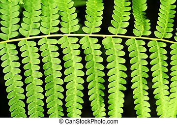 Fern frond leaf background - a Fern frond leaf background