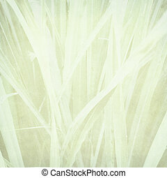 Pale grass print on paper - pale lemongrass print on paper...