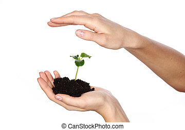 plant in the women hands on a white background