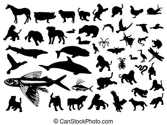 Animal Symbols  - collection vector illustration