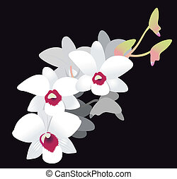 White Orchid. Vector Illustration isolated on black...