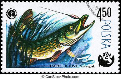 POLAND - CIRCA 1979 Pike - POLAND - CIRCA 1979: A Stamp...