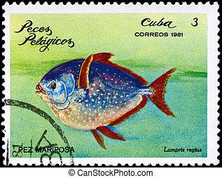 CUBA - CIRCA 1981 Glancefish - CUBA - CIRCA 1981: A Stamp...