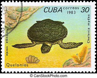 CUBA - CIRCA 1983 Green Turtle - CUBA - CIRCA 1983: A Stamp...