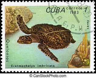 CUBA - CIRCA 1983 Hawksbill - CUBA - CIRCA 1983: A Stamp...