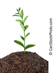 Plant growing - A plant growing from a heap of soil infers...