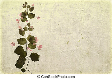 Bougainvillea on white washed plaster