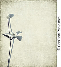 Blue long stem and seed head on grunge background