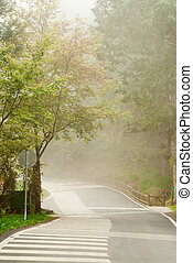Mist on road in forest in daytime with nobody.
