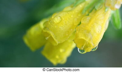 Macro of yellow flowers on green leaves background, DOF