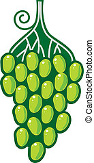 Vector grapes on white background