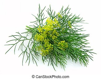 Blossoming fennel