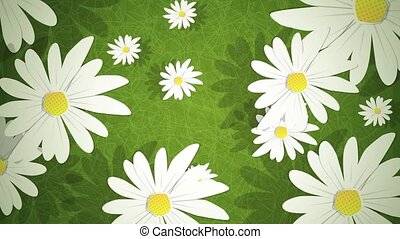 Summer Daisies Loop HD - Dynamic graphic animation using...