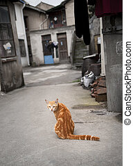 Red cat in narrow street - Red cat in a Chinese street