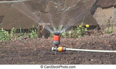 Sprinkler. - Rotating sprinkler watering a flowerbed.