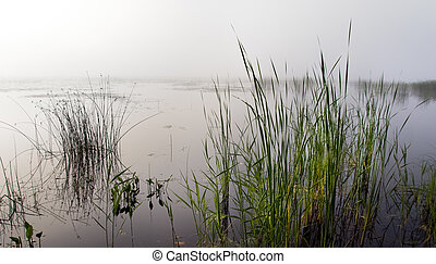 Reeds in a foggy lake