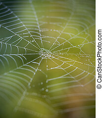 Cobweb with green background