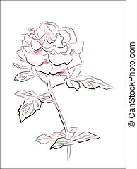 vintage illustration of pink rose