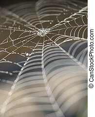 Cobweb - Close up of cobweb with shallow depth of field