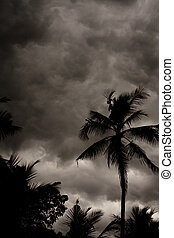 Tropical Monsoon Stormy Sky with Palm Trees