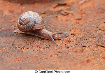 Snail - Big slick snail over old rusted surface