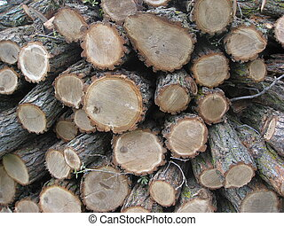 Woodpile - Oak Woodpile