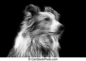 Artistic Impression Pencil Drawing of Border Collie -...